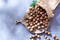 Porcas de macadâmia australianas, colheita fresca do unpeeld Imagem de Stock Royalty Free