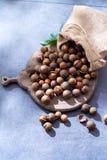 Porcas de macadâmia australianas, colheita fresca do unpeeld Fotos de Stock