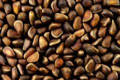 Porcas do sibirica de Cedar Pine Pinus do Siberian Foto de Stock Royalty Free