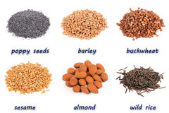 Porcas e sementes Imagens de Stock