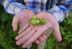 Porcas nas mãos de um menino nas madeiras menino, natureza, jardim, criança, jovem, verde, fora, verão, planta, jardinando, flor, Imagens de Stock Royalty Free
