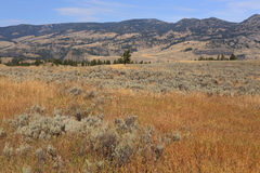 Lamar Valley Stock Photography