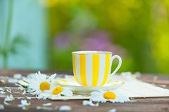 Porcelainl cup with green tea on table Stock Photos