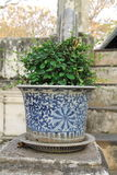 Porcelain flowerpots. Close up picture of porcelain flowerpot along stairway Stock Photos
