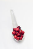 Porcelain spoon with fresh cranberries Royalty Free Stock Photography