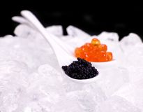 Porcelain spoon full of red and sturgeon black caviar Royalty Free Stock Photo