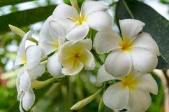 Porcelana kwiat Zdjęcia Royalty Free