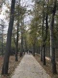 Porcelanowa Pekin Nanhaizi Parkowa pi?kna sceneria zdjęcia stock