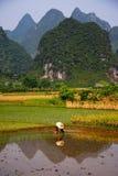 porcelanowa wsi pola ryż praca Obraz Royalty Free