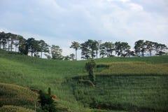 Porcelanowa Yunnan podróż zauważa 1 Fotografia Stock