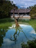 porcelanowe 10 park lijiang góry scenerii turystę miasta Fotografia Royalty Free