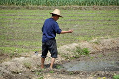 porcelanowego średniorolnego pengzhou ryżowy ziaren target1470_0_ Obraz Stock