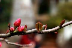 Porcelanowi Kunming świątyni parka begoni Złoci kwiaty zdjęcia stock
