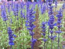 Porcelanowy Jinzhou Expositionï ¼  Międzynarodowy Ogrodniczy kwiat Fotografia Royalty Free