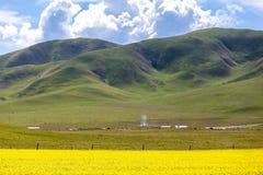 Porcelanowy Qinghai jezioro w kwiatu gwałcie Fotografia Royalty Free