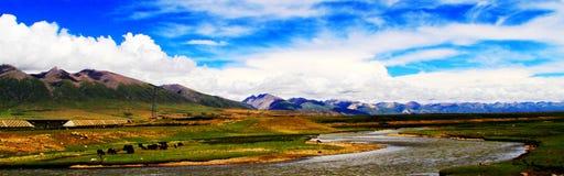 Porcelanowy ` s Tybet, Północny obszar trawiasty Tybet fotografia royalty free