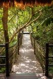 Porcelanowy tropikalny las deszczowy obraz royalty free