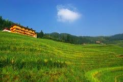 porcelanowy wsi pola krajobraz zdjęcia stock