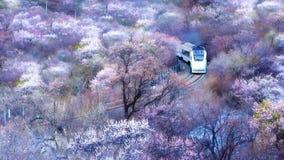 Porcelanowy wysoki prędkość pociąg biega przez oceanu kwiaty zdjęcia stock