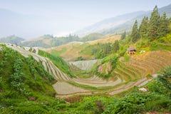 porcelany krajobrazowy ryż taras Zdjęcia Stock