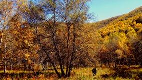 porcellana di autunno Fotografie Stock