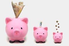 Porcellini salvadanaio che aumentano di dimensione con gli euro Concetto crescente di investimento Immagine Stock Libera da Diritti