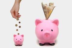 Porcellini salvadanaio che aumentano di dimensione con gli euro Concetto crescente di investimento Immagini Stock