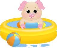 Porcellino della piscina Immagini Stock