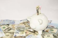 Porcellino salvadanaio bianco che sta sugli euro e sui dollari Immagine Stock Libera da Diritti