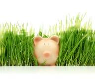 Porcellino salvadanaio con erba verde Fotografie Stock