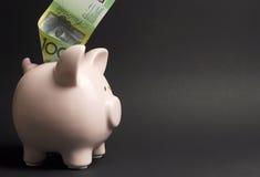 Porcellino salvadanaio con l'australiano cento note del dollaro - con lo spazio della copia Immagini Stock Libere da Diritti