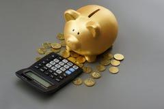 Porcellino salvadanaio dorato con il calcolatore Penna, occhiali e grafici Immagini Stock Libere da Diritti