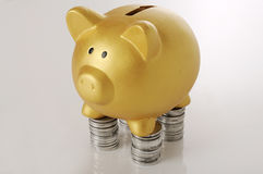 Porcellino salvadanaio dorato con le monete Fotografie Stock
