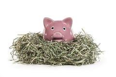Porcellino salvadanaio nel nido tagliuzzato del dollaro Immagine Stock
