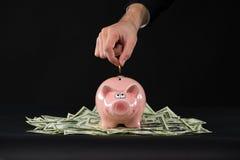 Porcellino salvadanaio rosa che sta sui dollari Fotografie Stock