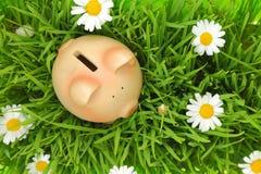 Porcellino salvadanaio su erba verde con i fiori Fotografie Stock Libere da Diritti