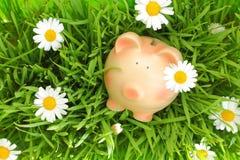 Porcellino salvadanaio su erba verde con i fiori Fotografia Stock