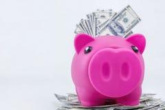 Porcellino salvadanaio su un mucchio di 100 note del dollaro Fotografia Stock Libera da Diritti