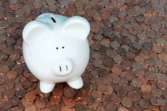 Porcellino salvadanaio sui penny Fotografia Stock Libera da Diritti