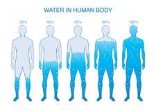 Porcentaje de la diferencia del agua en el cuerpo humano ilustración del vector