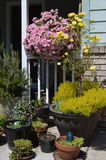 Porch container garden with spring flowers. Sunny bright floral container garden welcomes visitors, cropped and closeup vertical Stock Image