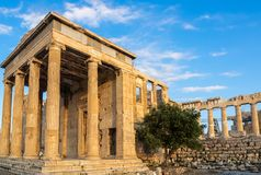 Porch of Poseidon, part of Erechtheion, sacred olive tree, walls of temple of Athena Polias on Acropolis, Athens, Greece against stock photography