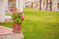 Porch rustic Villa in Tuscan style with flowers. In ceramic pots Stock Photo