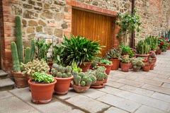 Porche complètement des cactus en Toscane images libres de droits