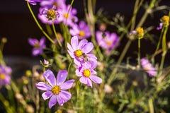 porción de abejas en la flor Imágenes de archivo libres de regalías