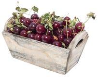 Porción de cerezas en blanco Imagen de archivo libre de regalías