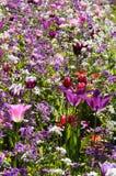 Porción de flores en jardín público Foto de archivo