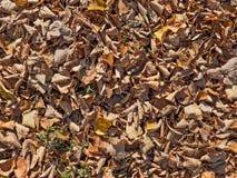 Porción de follaje caido seco entre hierba verde Imagen de archivo libre de regalías