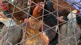 Porción de gallinas en jaula del alambre en mercado callejero asiático metrajes