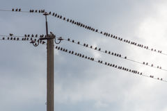 Porción de pájaros que se sientan en los alambres Fotos de archivo libres de regalías